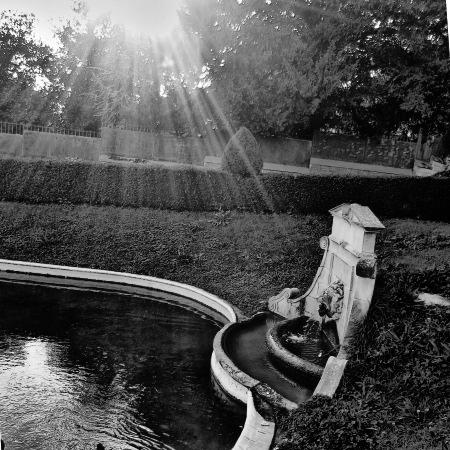 jardin_lion_450.jpg